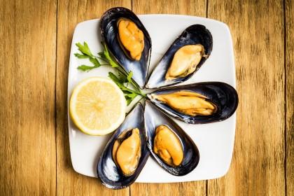 Blue Mussel 1/2 Shell