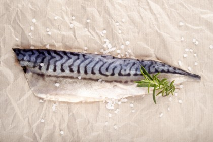 Norway Mackerel Fillet