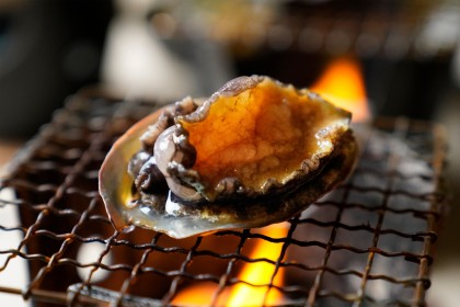Frozen Blanched Abalone (12pcs)